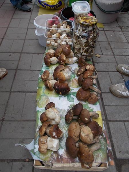 грибы 1
