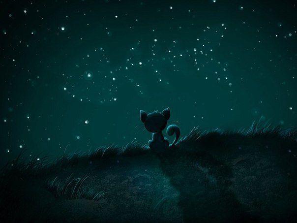 кот и звезды