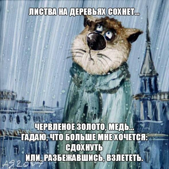 осенний кот