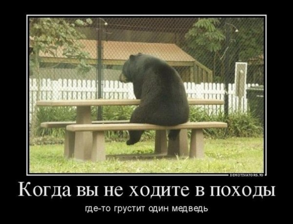 грустит медведь