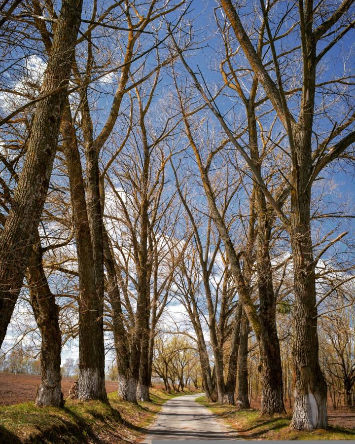 Село Кветунь: умозрение в природном ландшафте. Кветунь,Брянская область,Россия,путешествия,Трубчевск