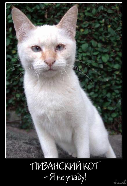 Пизанский падающий кот