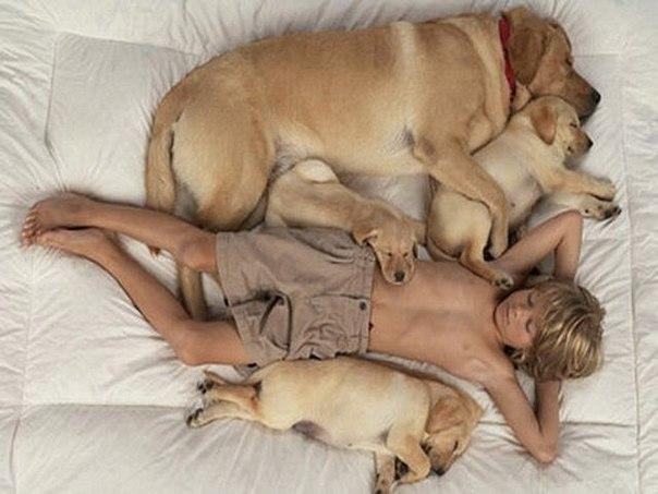 Хорошенькие собачки изысканной породы - обещание девушке, легкомысленного щеголеватого поклонника.