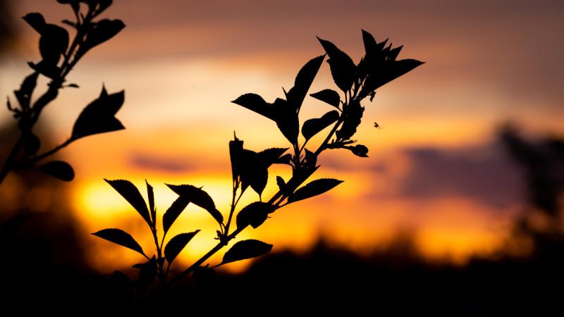 Закат в Подмосковье. Фотограф: Петр Данилов