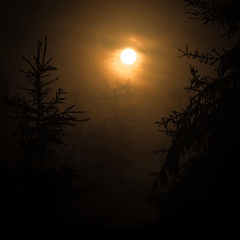 Лунный лес. Фотограф: Петр Данилов.
