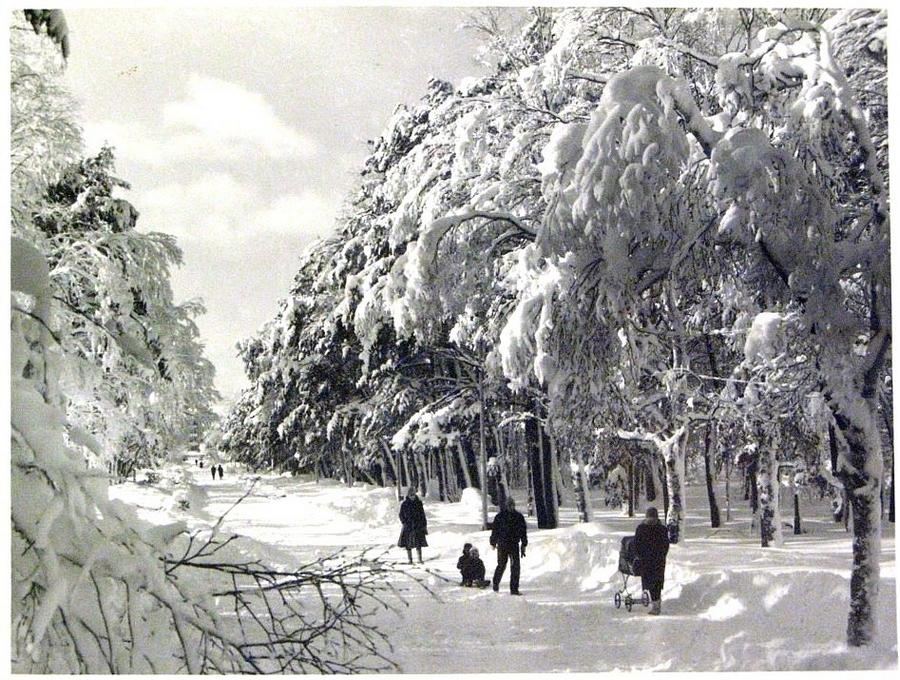 1988 Южно-Сахалинск 272768 Декабрь в парке им. Ю.Гагарина.jpg