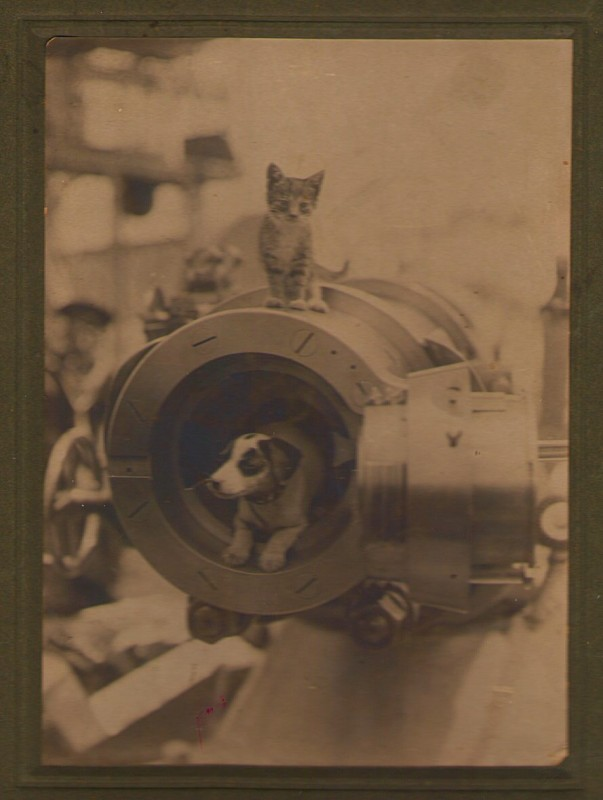 Ship mascots, believed, but not confirmed to be aboard the USS Pennsylvania (ACR-4), 1905 or later