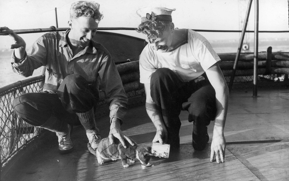 Sailors on board the H.M.A.S. Gascoyne [ca. 1945] George Yates and Don Cole feeding the ship's cat