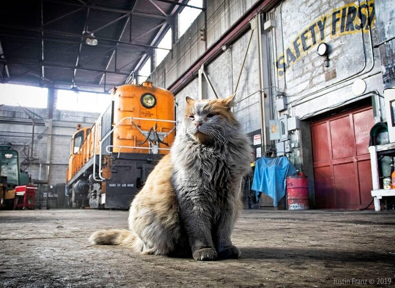 "Nevada Northern Railway's official machine shop cat ""Dirt"" 2019"