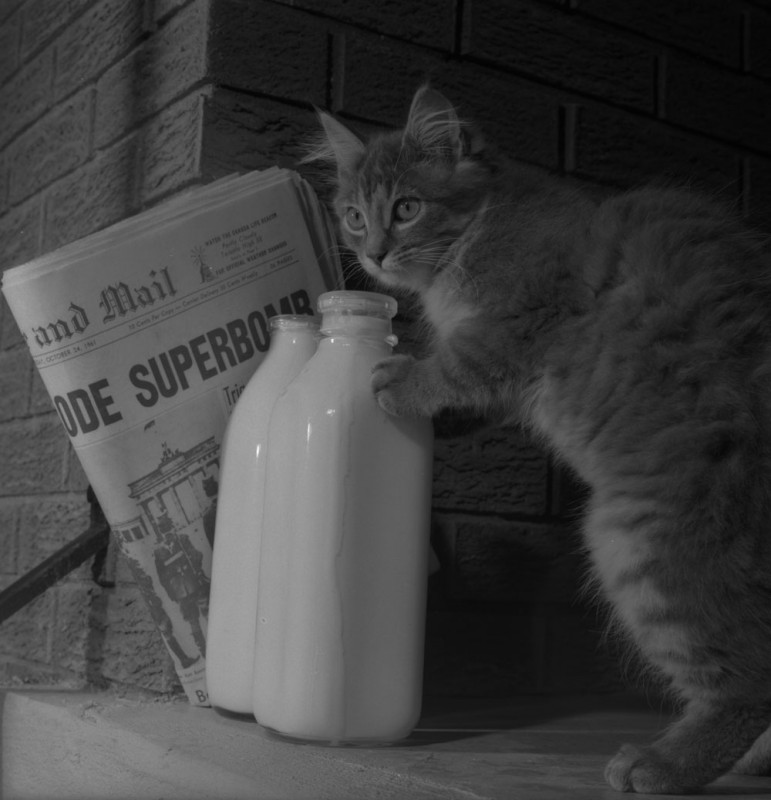 A cat and a bottle of milk, 1961