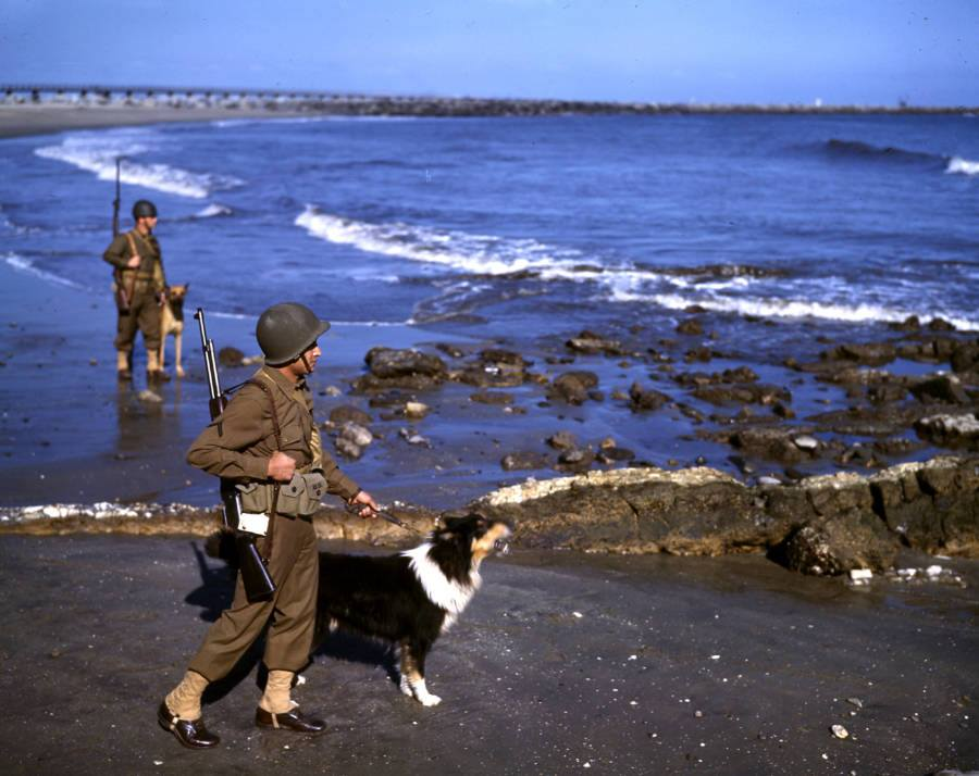 WWII. California, USA. 1943. U.S. soldiers with dogs patrol a beach in Los Angeles to spot possible Japanese attackers