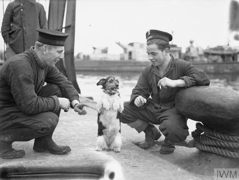 Czapka (Hat), the mascot terrier dog of the Polish Navy destroyer ORP Krakowiak, sits up by command. Photograph taken in Algiers - February 13-17 1943