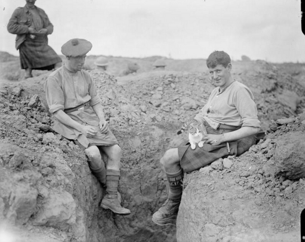 Two men of the 9th Battalion, Gordon Highlanders (15th Division) with their pet cat. Martinpuich, August 25th, 1916