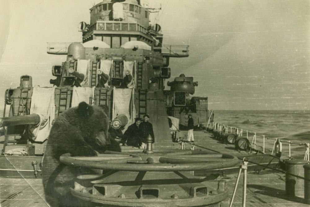 bear aboard cruiser Sverdlov