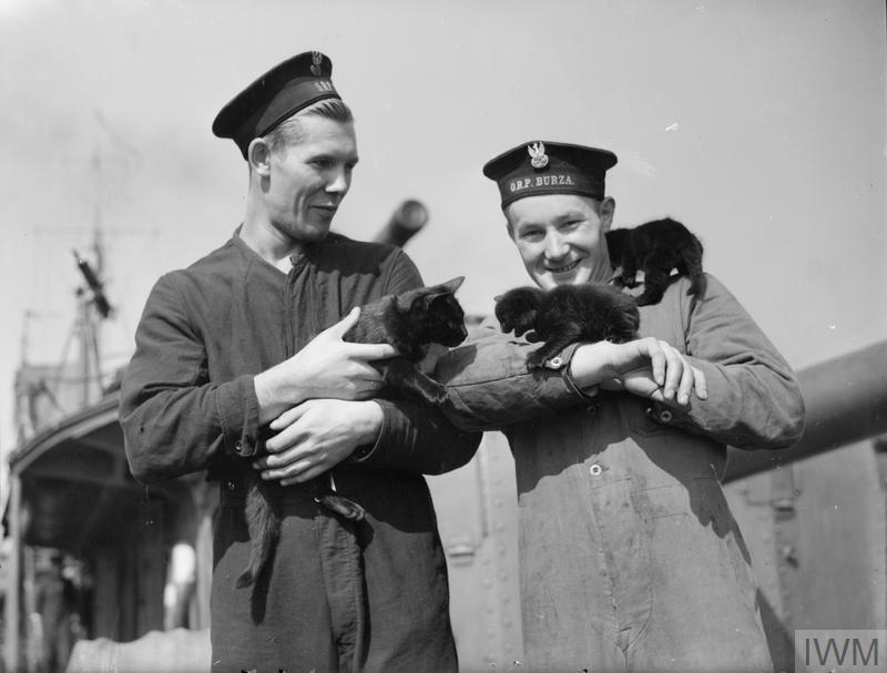 A cat mascot of the Polish Navy destroyer ORP Burza (Storm) has presented two additions to the complement of the ship. Here she is with her offspring. Devonport, 13 September 1940