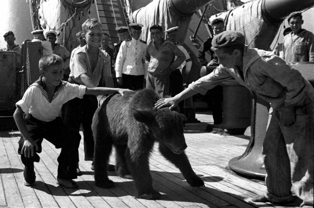 Ручной медвежонок на палубе