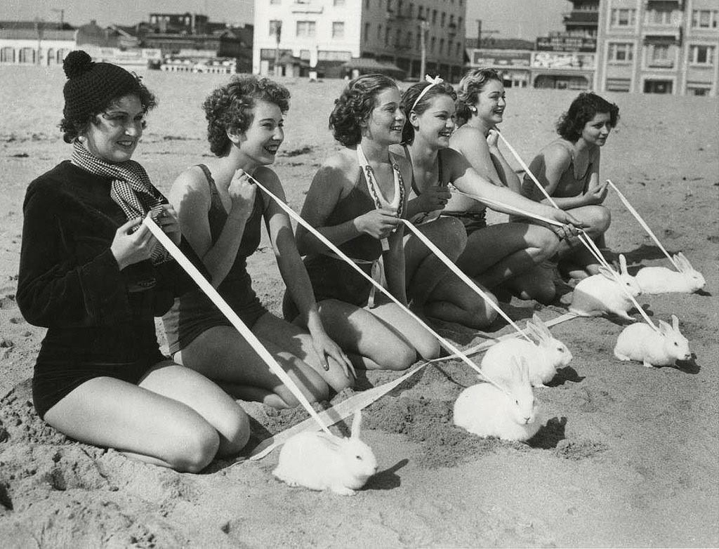 Rabbits race on Venice beach, California, 1935