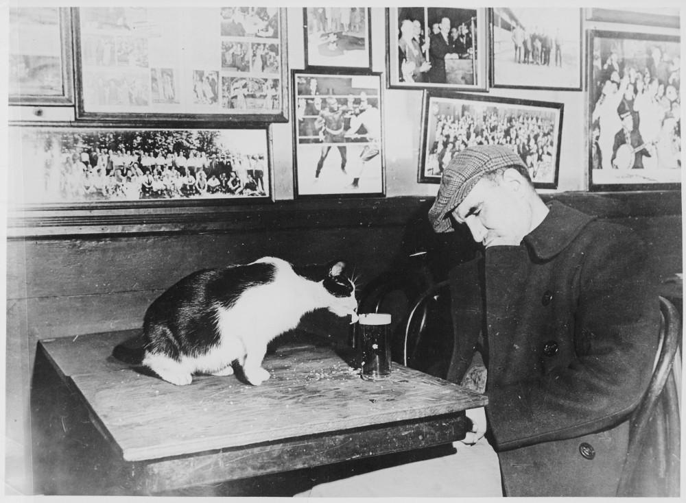 Посетитель бара Sammy's Bowery Follies спит за столиком, в то время как кошка пьет его пиво. Вашингтон, США, декабрь 1947 года.