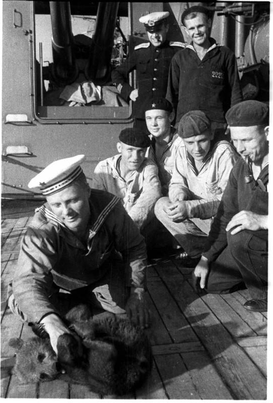 Моряки гвардейского крейсера Черноморского флота «Красный Кавказ» с корабельным питомцем
