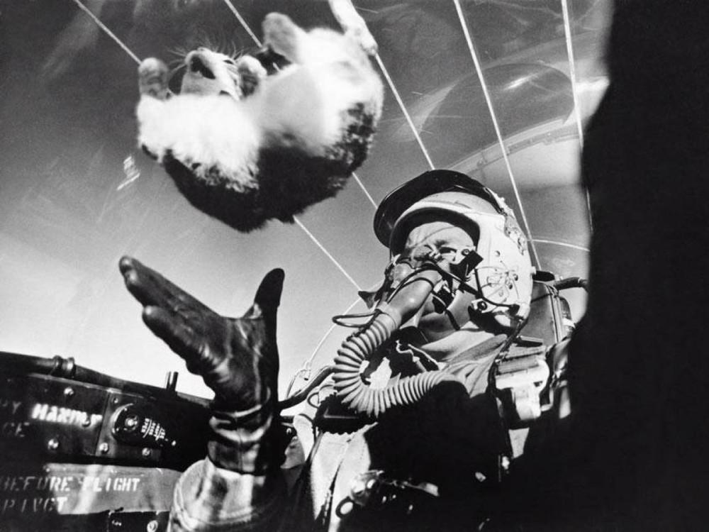 Капитан Дрю П. Паркс, находясь в самолете F-94C на высоте 25.000 футов над землей, в эксперименте подбрасывает котенка, чтобы показать, что любой может комфортно ощущать себя в состоянии невесомости