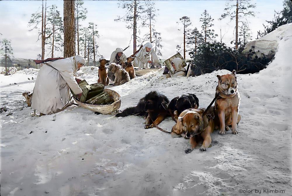 Собачьи упряжки на фронте, 1943. Масельгское направление. Фото Раскин