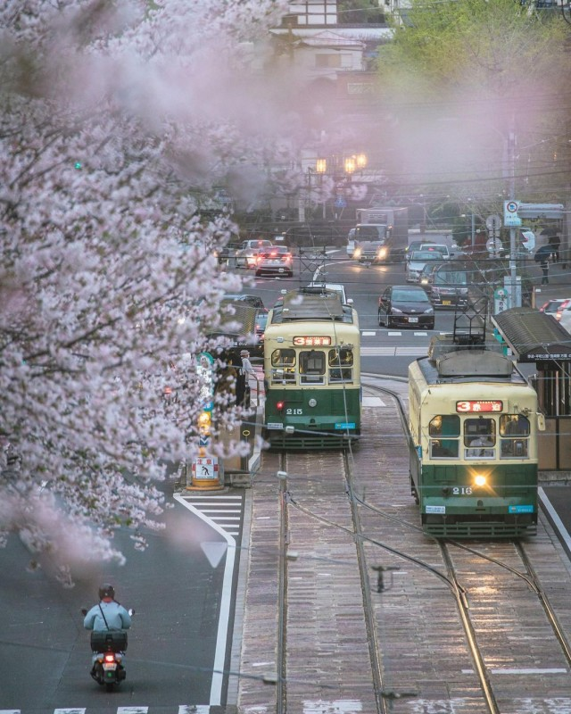 Sakura and Nagasaki tramway