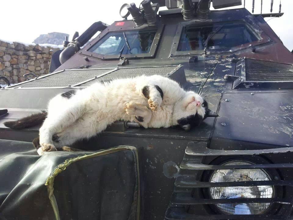Кот нежится на капоте турецкой бронемашины