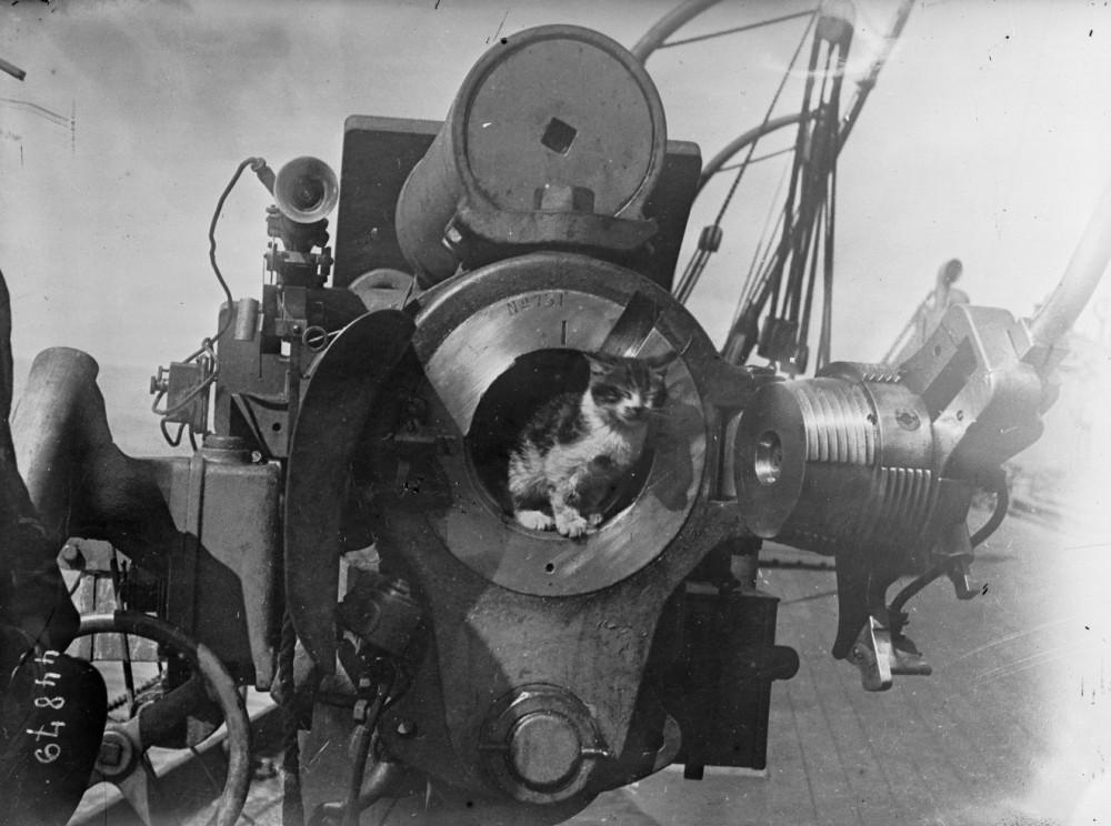 Chat_dans_l'ouverture_d'un_canon_[...]Agence_Rol 1915