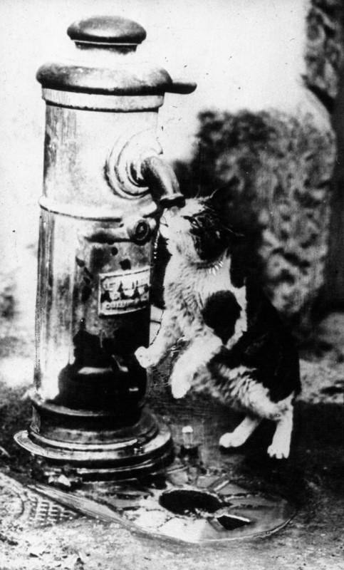 Кот охлаждается у фонтана 1932