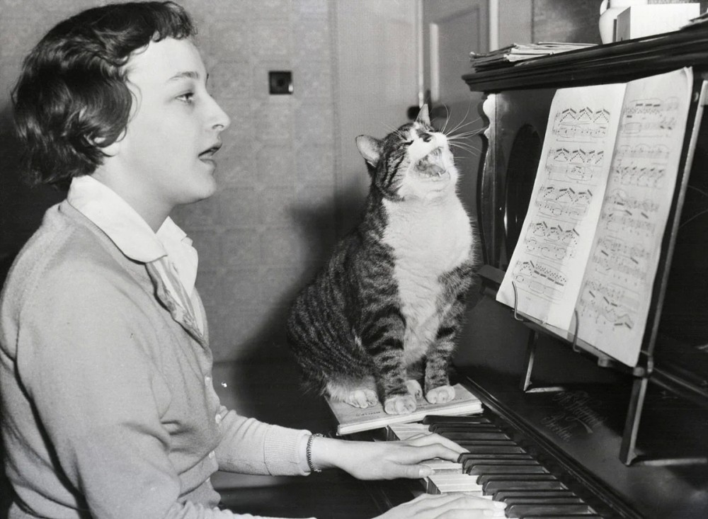 Кот, обожающий музыку, подпевает хозяйке в Вустере, Англия, 23 марта 1959 года