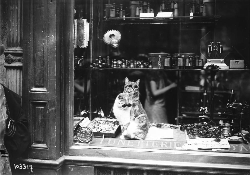 оригинальная реклама оптики на бульваре Сен-Жермен [кошки в очках, в окне] 1925