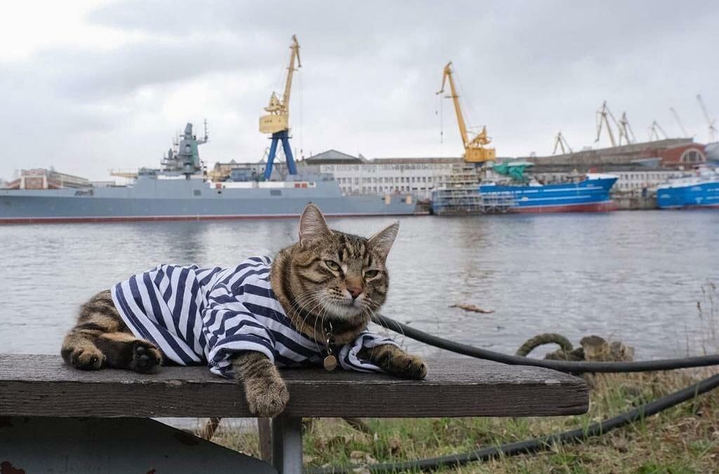 Матрос Васильевич, обитающий на судостроительном заводе «Северная верфь»