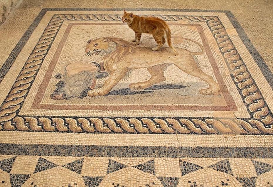 Cats Walking in the Ruins of Ephesus