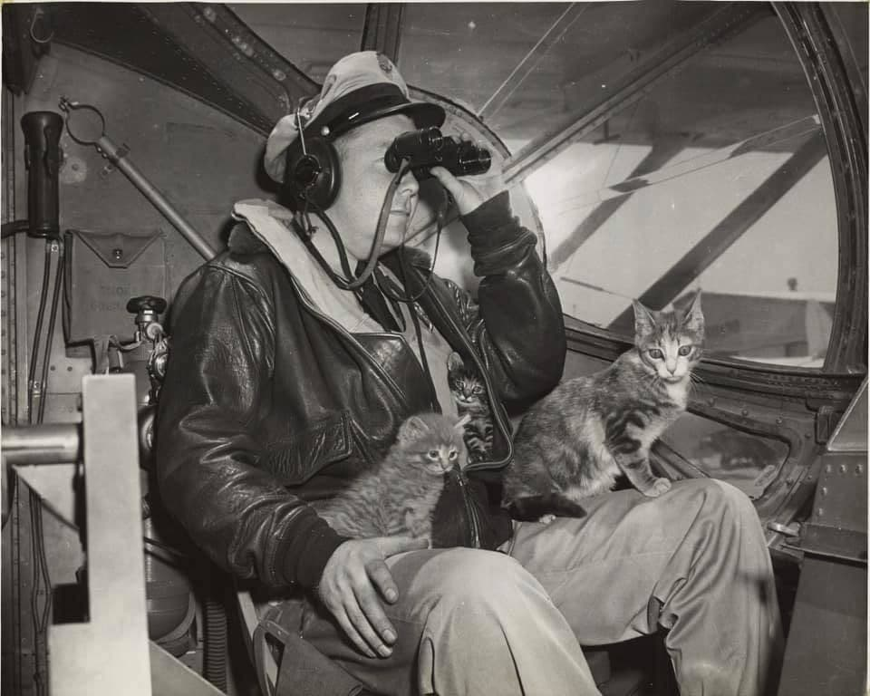 In 1945, Salty, the mascot at Air Station San Diego, became the first cat to take part in a rescue mission when