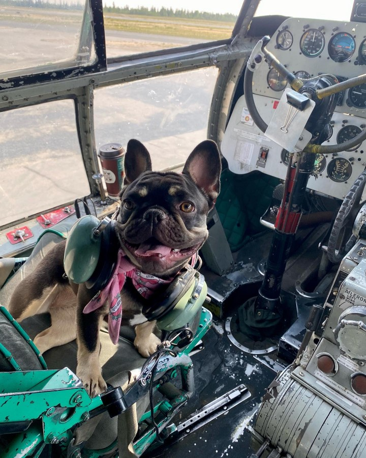 Captian Billie McBryan flying her C-46 to Hay River tonight to see the family.  Proud Dog Mom