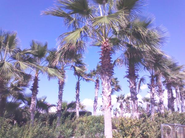 пальмы у пляжа