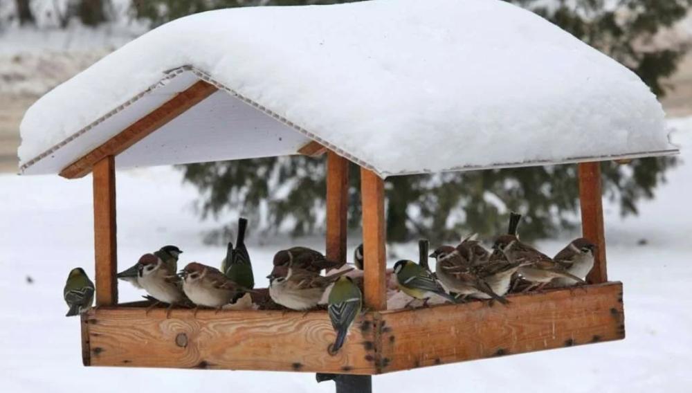 кормушка для птиц в Андреевском парке