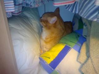 Меж двумя подушками