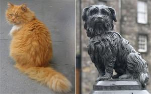 dog-cat_2729018b