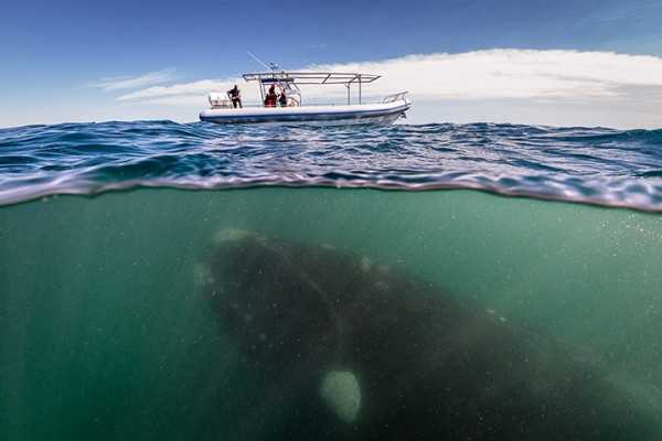 Whale-Under-A-Boat-001
