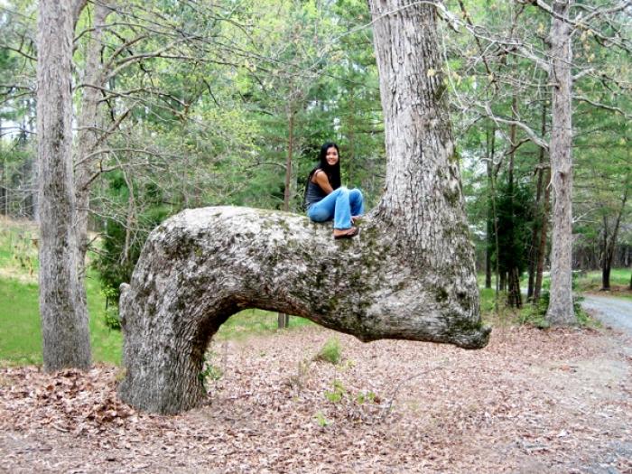 trail_tree_2