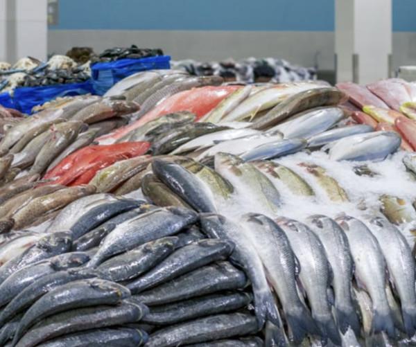 Искусственно выращенная рыба считается «самой токсичной едой в мире»