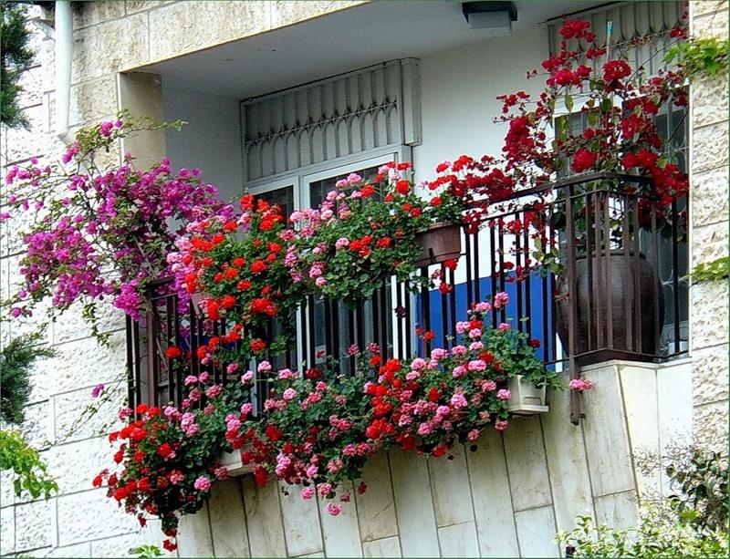 Цветущие растения на балконе. - лоджии - каталог статей - ба.