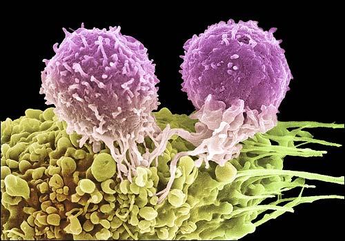 Клетки-5