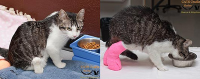 Корки до и после операции