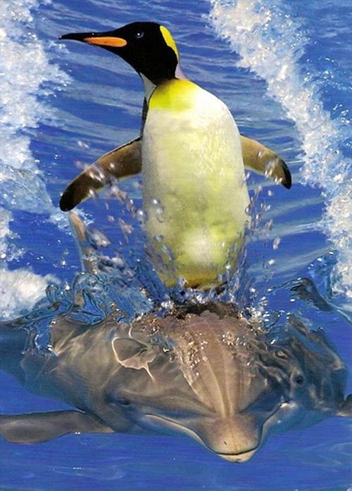 пингвин на дельфине