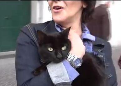 Tommasino-gatto-milionario2