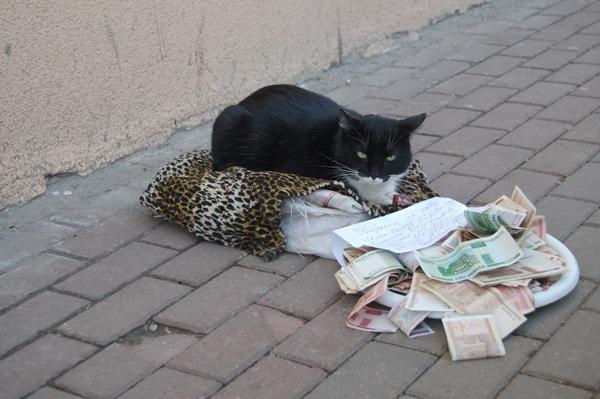 чёрный кот 1