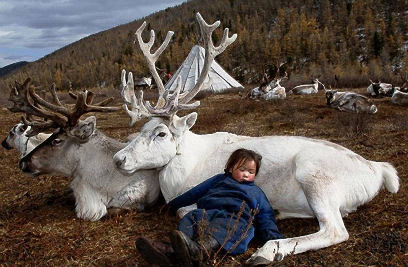 Mongolian Nomad Boy, sleeping with the reindeer ♥