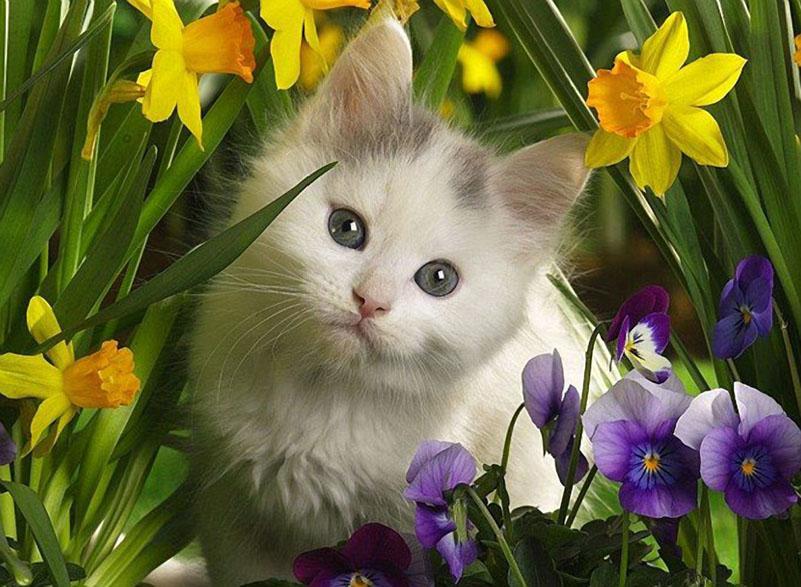 котик и цветы
